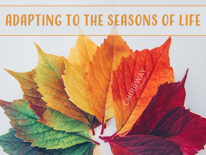 Adapting to the seasons of life