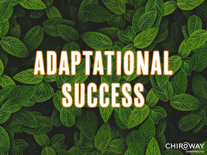 Adaptational Success
